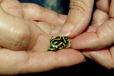 Little Green Bug by mystictrinketbox