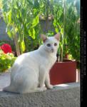 Cat 01 by artori-stock