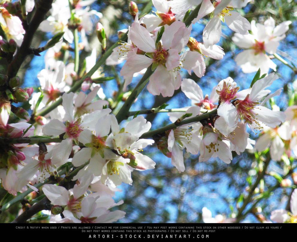 Flower 04 by artori-stock