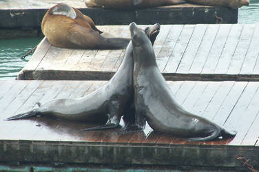 Seal Love by switchboard