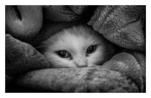 The Girl with the Stare in the Floof (bw) by JoeBlu