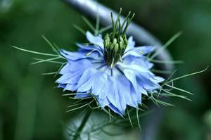 Miss Jekyl Light Blue by OfTheDunes