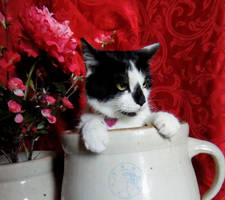 Cat In a Jug V2 Close Up by Tyrant-ess