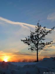 Tree Top by cheekz-jess