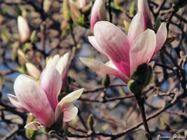 Blossomed by cheekz-jess