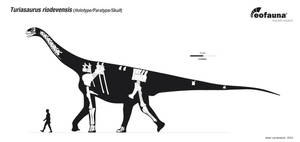Turiasaurus riodevensis by EoFauna