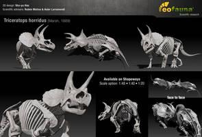 Triceratops horridus 3D skeleton sculpture by EoFauna