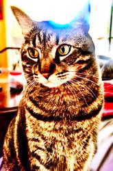tabby portrait 2 by cbettsr