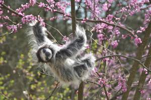 Springtime Sloth in a tree by mooki003