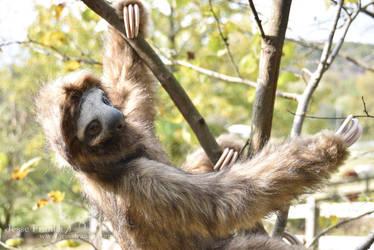 German Sloth by mooki003
