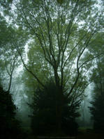 Foggy Trees by serel