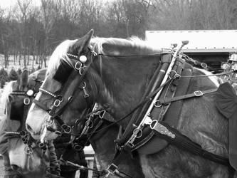 Horses by TamperdSoul
