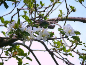 Ooh White Flowers by TamperdSoul