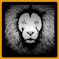 Lion  by attack-jack