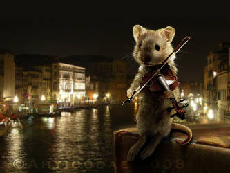 Mouse on the Rialto by Ahyicodae