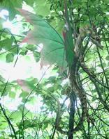 Leaf Dragon by Ahyicodae