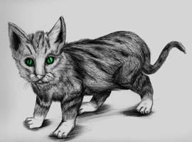 cat gatto mio bellissimo by sanderndreca