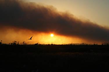 Bushfire by lunacyfreak