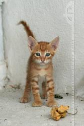 Orange Cuteness by thrumyeye