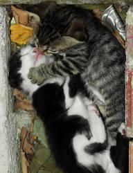 C'mmon, let's kiss.... by thrumyeye
