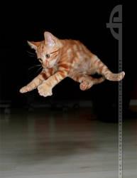 I Believe I can Fly by thrumyeye