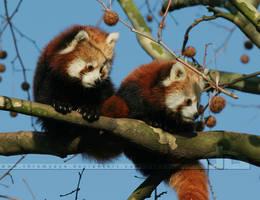 Twins in a Tree by thrumyeye