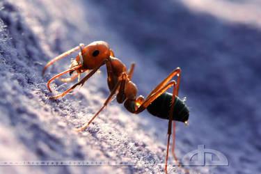 Backlit Ant by thrumyeye
