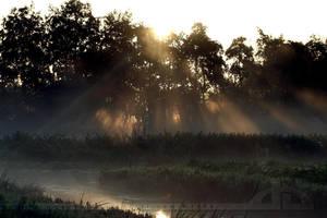 Misty Morning by thrumyeye