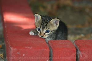 Brave New Kitty by thrumyeye