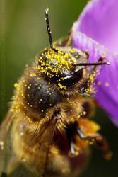 PollenHead by thrumyeye