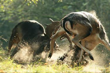 Deer Duel by thrumyeye