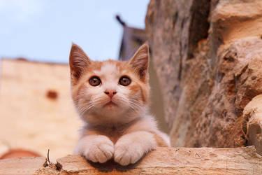 Kitten of the Castle by thrumyeye