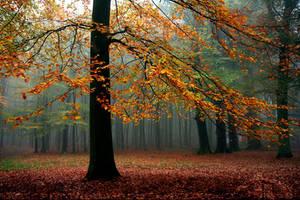 Foggy Forest by thrumyeye