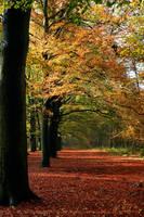 The Most Beautiful Season by thrumyeye
