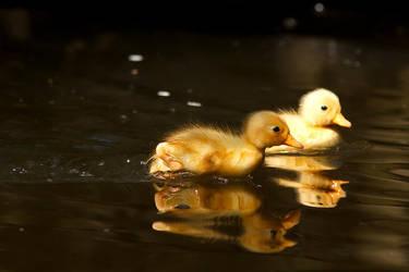 DuckRun by thrumyeye
