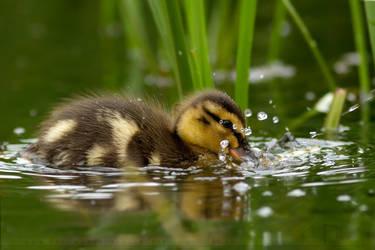 Splash. by thrumyeye