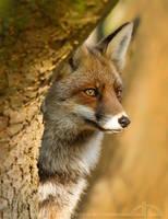 SpyFox by thrumyeye