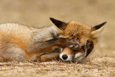 ShyFox by thrumyeye