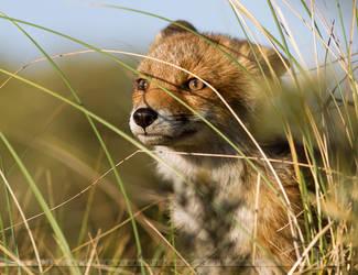 Hunting Fox by thrumyeye