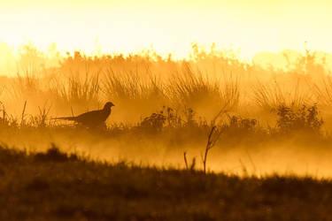 Layered Morning by thrumyeye