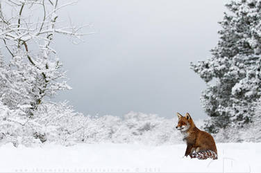 Snow Fox by thrumyeye