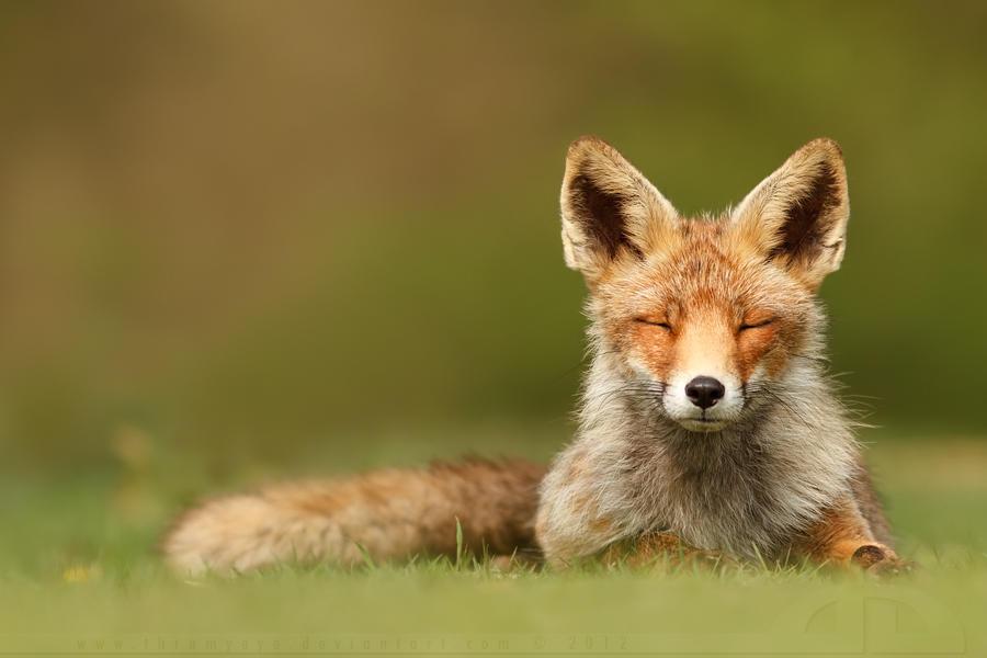 ZenFox by thrumyeye