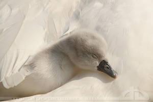 Sleeping Beauty by thrumyeye
