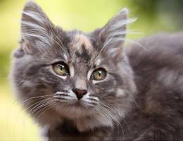 CatFace by thrumyeye