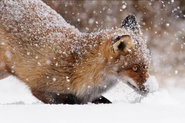 SnowPlowFox by thrumyeye