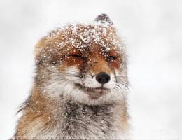 What the Fox? by thrumyeye