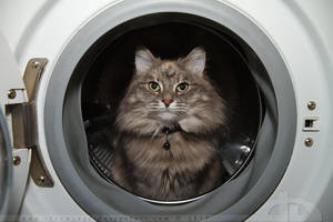Cleaning Cat by thrumyeye