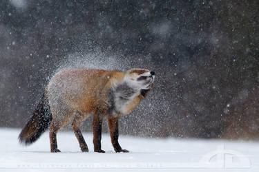 Shaking off the Winter by thrumyeye