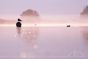 Still Waters... by thrumyeye