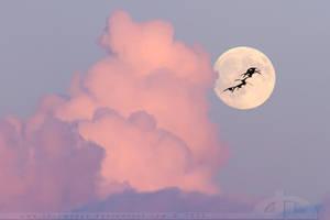 Fly to the moon by thrumyeye